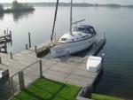 Swan in the Netherlands.jpg